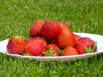Frutti della fragola Fotografia Stock Libera da Diritti