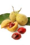 Frutti della noce moscata Fotografia Stock