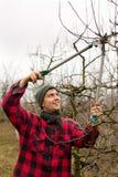 Frutti della potatura Fotografia Stock Libera da Diritti