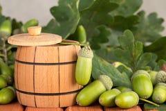 Frutti della quercia Fotografia Stock