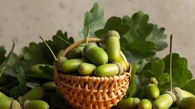 Frutti della quercia immagine stock libera da diritti