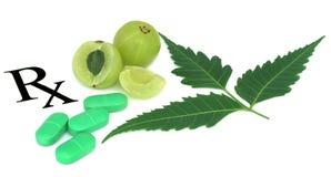 Frutti di Amla prescritti come medicina alternativa Immagine Stock Libera da Diritti