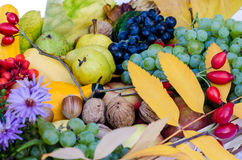 Frutti di autunno Fotografia Stock Libera da Diritti