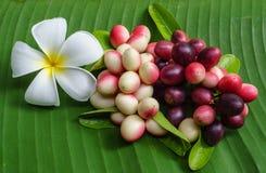 Frutti di carandá del Carissa in permesso della banana Immagini Stock
