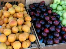 Frutti di estate Immagine Stock
