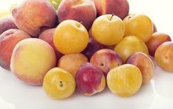 Frutti di estate - prugne e pesche Fotografie Stock Libere da Diritti
