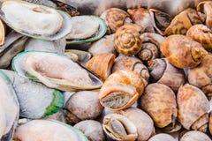 Frutti di mare Immagine Stock Libera da Diritti