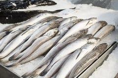 Frutti di mare con le sardine Fotografie Stock Libere da Diritti