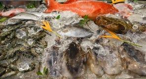Frutti di mare congelati Fotografia Stock Libera da Diritti
