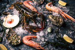 Frutti di mare crudi: aragosta, gamberetto ed ostriche fotografia stock libera da diritti