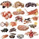 Frutti di mare e crostacei immagine stock libera da diritti