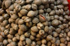 Frutti di mare freschi dei crostacei delle vongole il mercato di prodotti freschi Immagine Stock Libera da Diritti