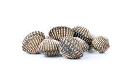 Frutti di mare freschi dei cuori edule su fondo bianco Fotografie Stock Libere da Diritti