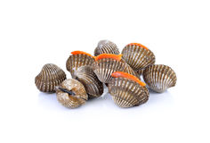 Frutti di mare freschi dei cuori edule su fondo bianco Fotografia Stock