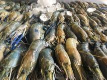 Frutti di mare freschi sul ghiaccio nel mercato ittico fotografia stock