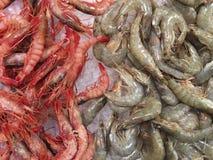 Frutti di mare - gamberetti - gamberetti Immagine Stock
