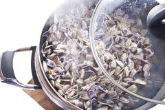 Frutti di mare, molluschi Fotografia Stock Libera da Diritti