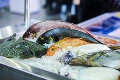 Frutti di mare su ghiaccio al mercato ittico, pesce di mare immagini stock libere da diritti