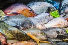 Frutti di mare su ghiaccio al mercato ittico, pesce di mare fotografia stock libera da diritti