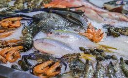 Frutti di mare su ghiaccio al mercato ittico, pesce di mare, gamberetto, salmone fotografia stock