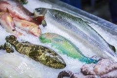 Frutti di mare su ghiaccio al mercato ittico, pesce di mare, polipo immagine stock libera da diritti
