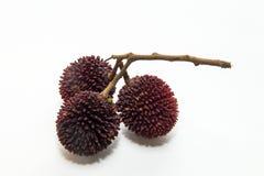 Frutti di Pulasan isolati su fondo bianco fotografia stock libera da diritti