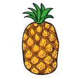 Frutti disegnati a mano dell'ananas isolati Immagini Stock Libere da Diritti
