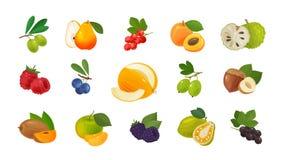 Frutti e bacche, insieme delle icone colorate Concetto dell'alimento Illustrazione di vettore illustrazione vettoriale