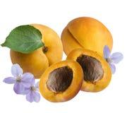 Frutti e fiori delle albicocche, isolati Fotografie Stock Libere da Diritti