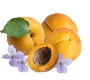 Frutti e fiori delle albicocche, isolati Immagine Stock