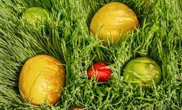 Frutti in erba verde immagini stock