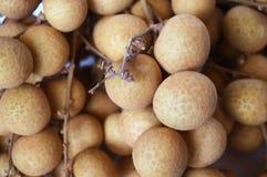 Frutti freschi del longan Fotografie Stock
