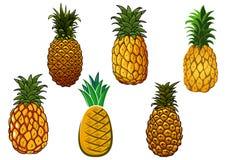 Frutti gialli maturi tropicali dell'ananas royalty illustrazione gratis
