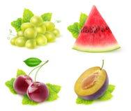 Frutti isolati con la raccolta della menta Fotografie Stock Libere da Diritti
