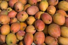Frutti-mango Fotografia Stock