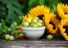 Frutti maturi in ciotola bianca con il mazzo del girasole sulla tavola di legno, tema dell'uva spina di estate immagini stock libere da diritti