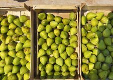 Frutti maturi dei fichi verdi in scatole di legno fotografia stock