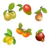 Frutti messi Illustrazione di Stock