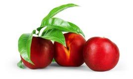 Frutti organici della nettarina con le foglie su fondo bianco fotografie stock libere da diritti