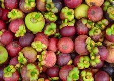 Frutti organici freschi del mangostano al mercato Fotografia Stock Libera da Diritti