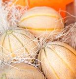 Frutti organici freschi del melone Composizione della pagina dei frutti sul segno Fotografie Stock Libere da Diritti