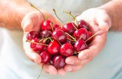 Frutti rossi delle ciliege Immagine Stock Libera da Diritti