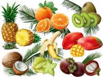 Frutti tropicali con le foglie di palma Fotografie Stock