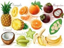 Frutti tropicali messi Fotografia Stock Libera da Diritti