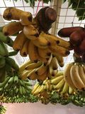 Frutti tropicali Singapore Immagine Stock Libera da Diritti