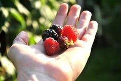 Frutti in una mano Immagini Stock