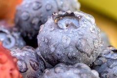 Frutti, uva, mele, mirtillo Fotografia Stock Libera da Diritti