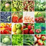 Frutti, verdure, bacche Fotografia Stock Libera da Diritti