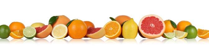 Fruttifica il pompelmo del limone delle arance in una fila isolato Immagini Stock