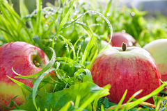Fruttifica le mele mature, rosse, succose si trovano su una fine dell'erba verde su Fotografia Stock Libera da Diritti